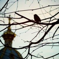 птичка :: Дарья Рахманова