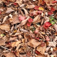 Осенние листья :: Юрий