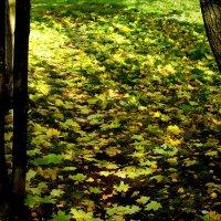 Листья, листья.... :: Юрий