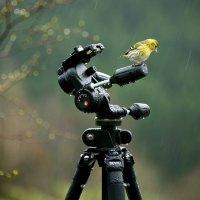 когда идет дождь! :: cemerges