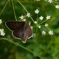 маленькая бабочка :: Александр Крупский