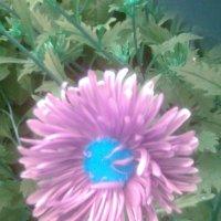 астра ненатуральных цветах :: Дарья Неживая