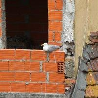 Чайка в Порто :: АЛЕКСАНДР МИНКОВИЧ