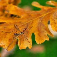 Осенний кУмарик... :: АндрЭо ПапандрЭо
