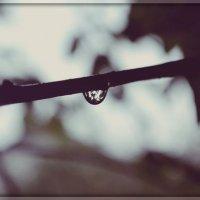 После дождя. :: Марина Николаева