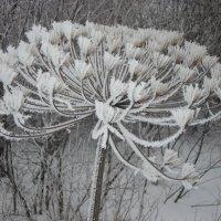 Зимний цветок :: Фотиния М