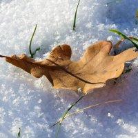 зима пришла :: Евгений Фролов