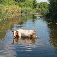 Охлаждение летом :: Дарья Осадчая