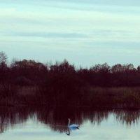 Лебединый пруд :: Ксения Шибакова