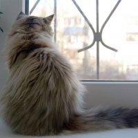 Кошачья печалька :: pich