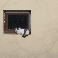кот в квадрате.. :: Марина Волкова