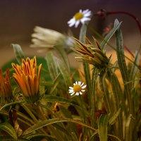 Осенний цвет... :: Виктория Гавриленко