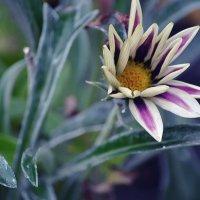 Цветок :: Виктория Гавриленко