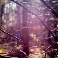 Осенние лучи солнца :: Roman Rez