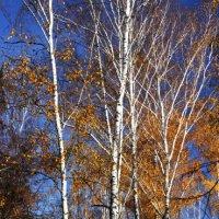 Осенний парк :: Виктор Дорофеев