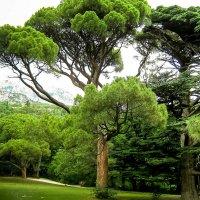 Воронцовский парк, Алупка :: ~ Лидия ~