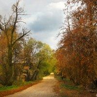 Осеннею дорожкою... :: Юрий