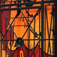 Поймали бедную Жар  Птицу... и в клетку, под замок :: Николай Кондаков