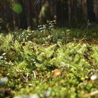 Лесной ковёр :: Виктор Баштовой