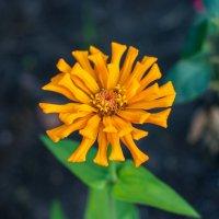 Цветок :: Катя Вод