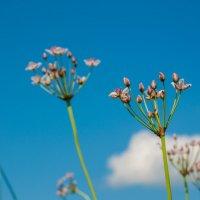 Полевые цветы :: Катя Вод
