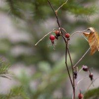 Краски осени. Последние листья. :: Сергей Калиновский