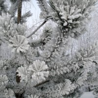 Все та же зима :: Irina