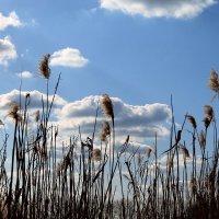 Весна в Ольховатке :: Дарья Осадчая