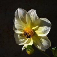 Цветок :: михаил Гейкер