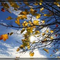 В лучах осенних солнца жмурясь... :: DimCo ©