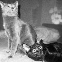 cats :: Alesya Putsilouskaya