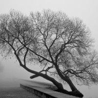 Туман2 :: Николай Климович