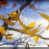 Осенний вальс :: DimCo ©