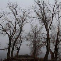 В тумане :: Dr. Olver