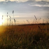 Поле при закате солнца. :: Ирина Барна
