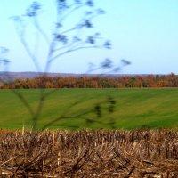 Осенние поля :: Виталий
