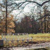 Одинокая осень :: Алёна Сасина