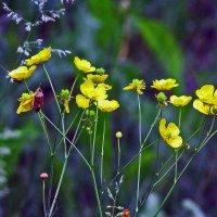 цветы полевые :: юрий иванов