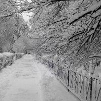 Начало зимы :: Оксана Баллыева