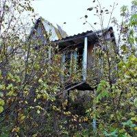 Дом на ножках 2 :: Оксана Баллыева