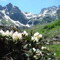 В горах Архыза :: Светлана Попова