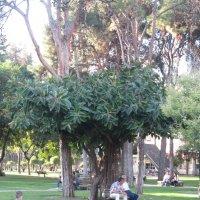 Дерево :: ирина гунгор