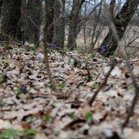 весна :: Дарья Осадчая