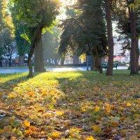 Опавшие листья :: Александр Крупский