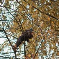 Детей не аисты принося, они на деревьях растут :: Svetlana Shumilova