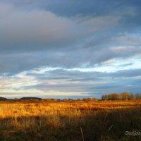 Выглянуло солнышко.. :: Антонина Гугаева
