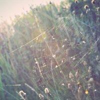 Первые лучи осеннего солнца :: Наталья Саввина