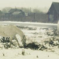 туман :: Илья Казанцев