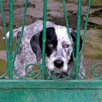Осторожно,злая собака! :: Лариса Красноперова