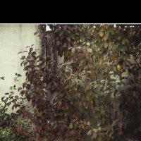 просто листья г. Хмельницкий, Украина :: Oleg Alexeevich